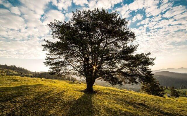 Nachhaltigkeit in der Assekuranz: Gibt es nachhaltige Lebensversicherungen?