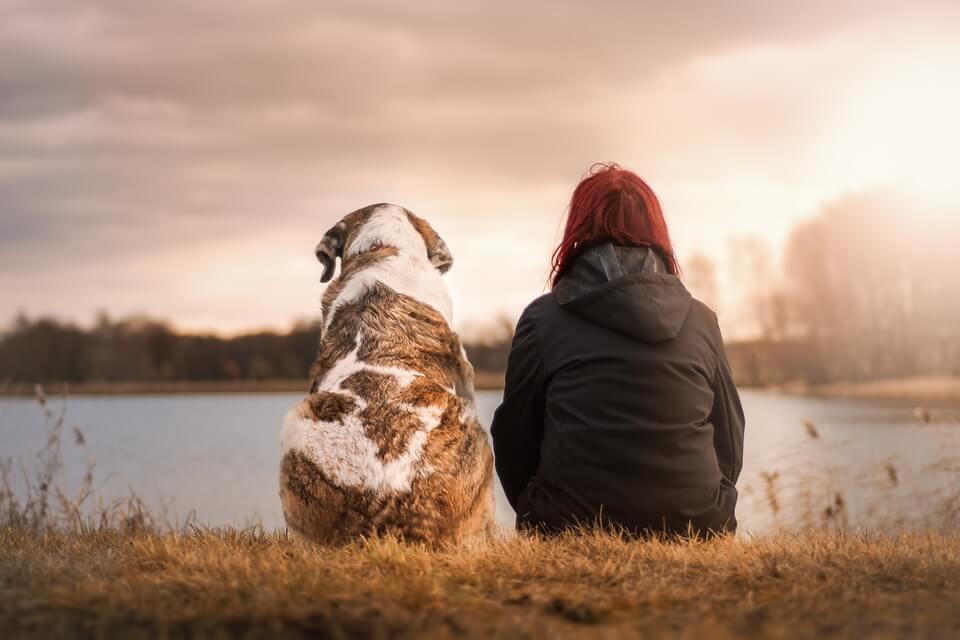 Für Hund und Herrchen: Woran Sie eine gute Hundeversicherung erkennen